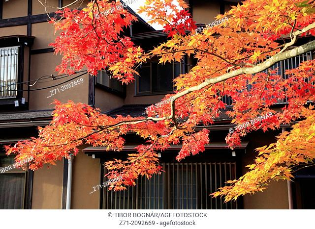 Japan, Hida, Takayama, autumn leaves,