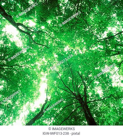 Low angle view of trees with protruding branches