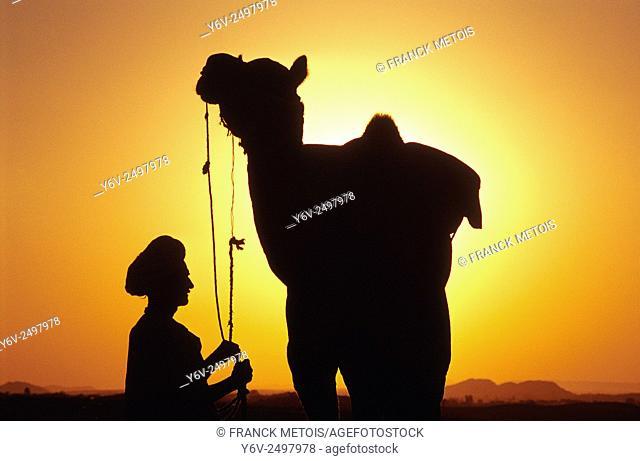 Dromedary and farmer at Pushkar ( Rajasthan, India)