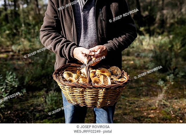 Close-up of senior man holding basket full of mushrooms in the forest