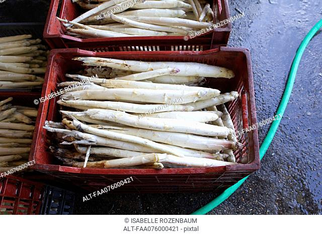White asparagus in crates