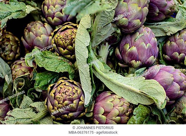 Europe, Italy, Lazio, Rome, fresh artichokes at the market of Campo de' Fiori