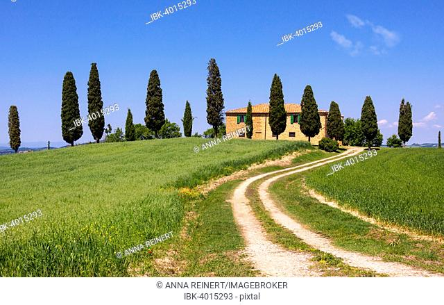 Country estate with cypress trees, Val d'Orcia, near Pienza, Province of Siena, Tuscany, Italy