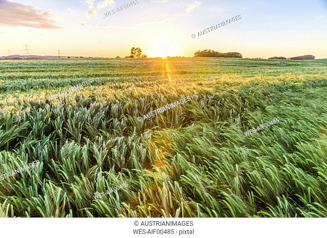 Austria, Innviertel, field against morning sun