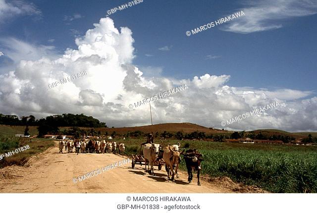 Municipality of Ipojuca, Pernambuco, Brazil