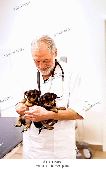 Smiling senior vet holding two puppies in clinic