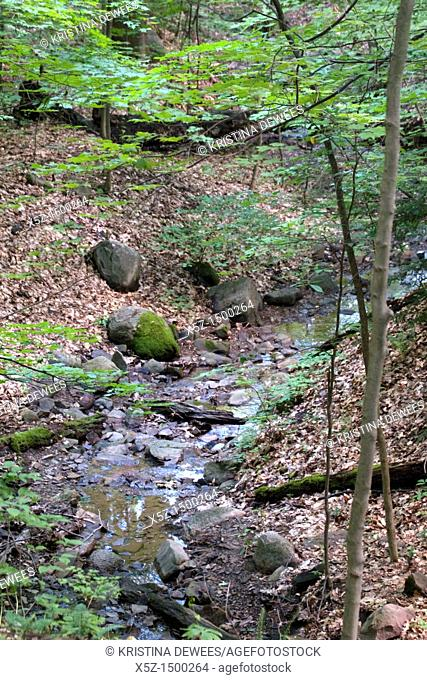 A fresh water stream in the woods of Ohio