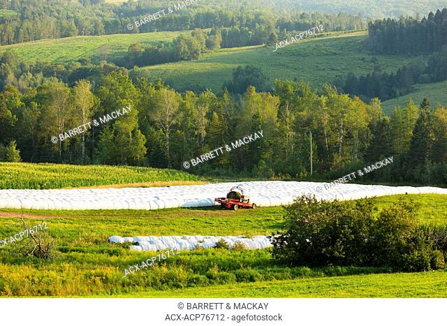Baled hay, Waterford, New Brunswick, Canada
