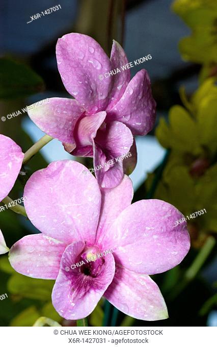 Orchid Garden Kuching Sarawak Malaysia