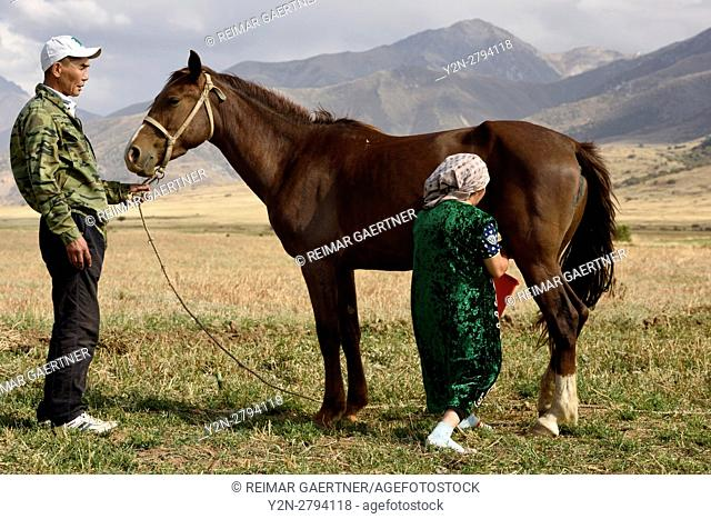 Husband holding mare while wife milks the horse in Aksu-Zhabagly Nature Reserve Kazakhstan