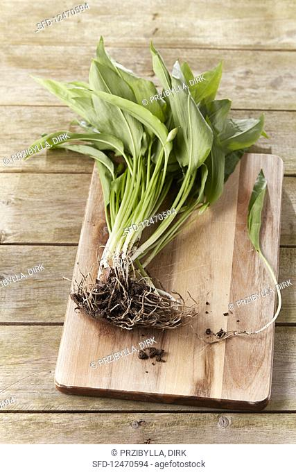 Fresh wild garlic with roots on a wooden board