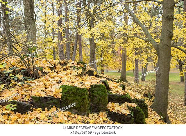 Fall leaves show changing season