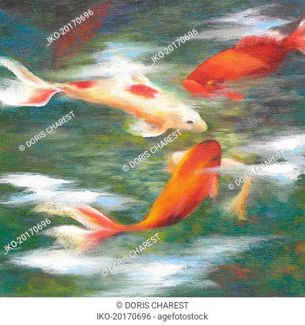 Koi carp goldfish swimming in pond