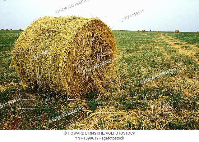 Large hay roll lying in the field to be covered from the weather and used as winter stock feed