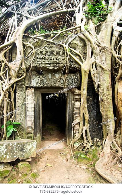 temple taken over by tree roots at the Ta Phrom temple complex at Angkor Wat in Cambodia
