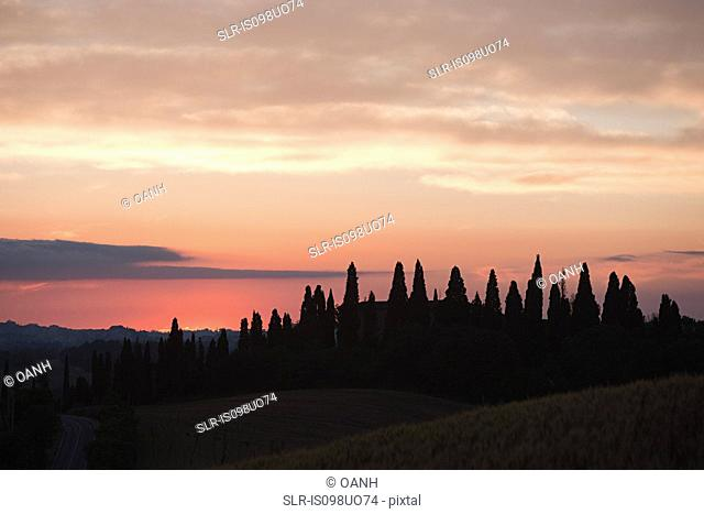 Cypress trees at sunset near Siena, Tuscany, Italy