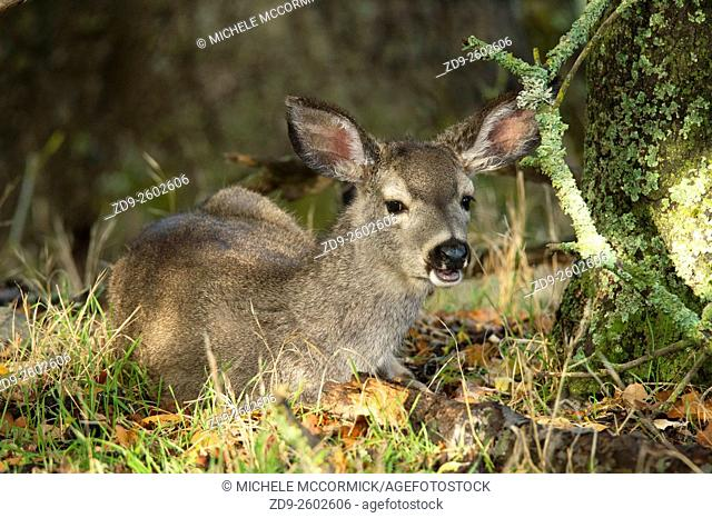 A young doe peers out from her resting place in a nature preserve