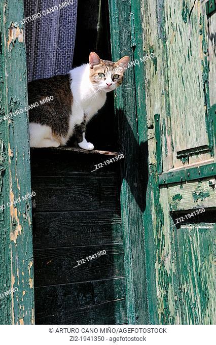 Cat on a door guard. Sighisoara, Romania