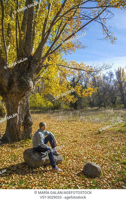 Man sitting by an Autumn tree. Sierra de Guadarrama National Park, Rascafria, Madrid province, Spain