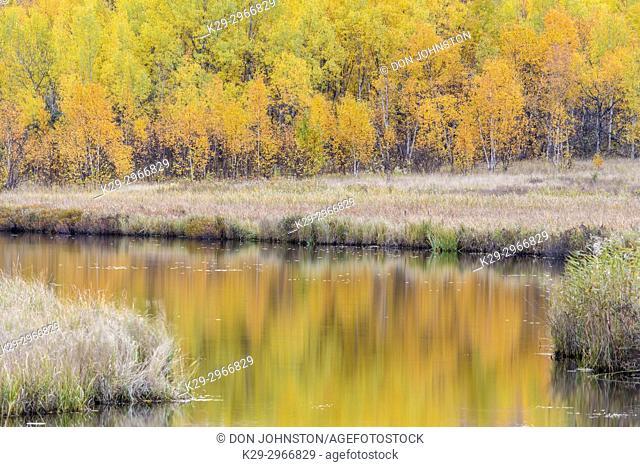 Autumn aspens on a hillside reflected in Robinson Lake, Greater Sudbury, Ontario, Canada