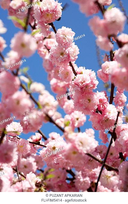 Tree Blossoms in Spring