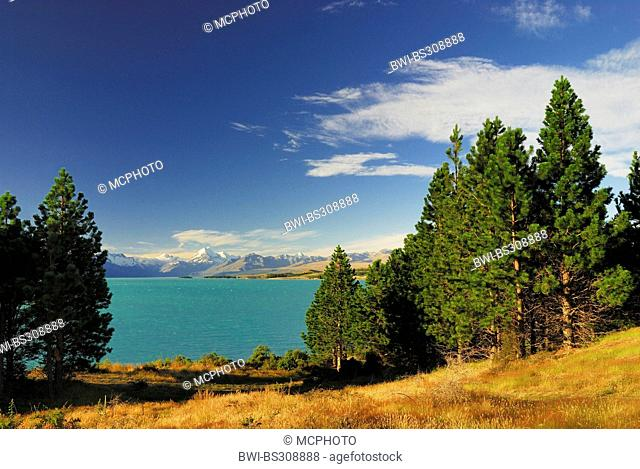 view over Lake Pukaki at Mt. Cook (Aoraki / 3754 m), the country's highest mountain, New Zealand, Southern Island, Canterbury, Mount Cook National Park