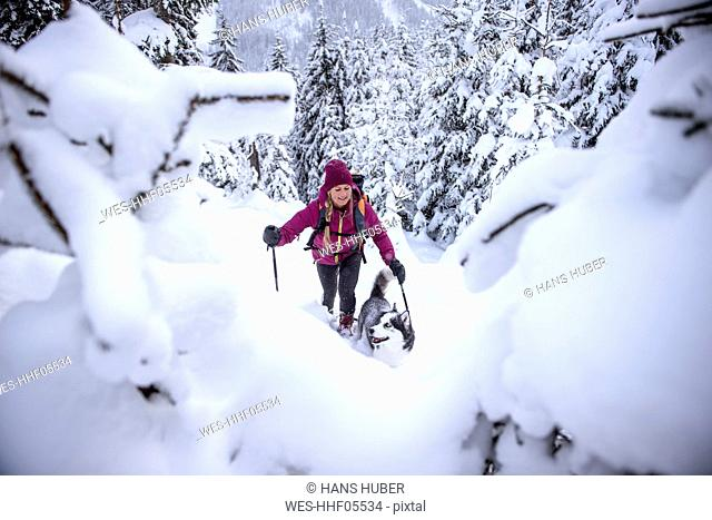Austria, Altenmarkt-Zauchensee, young woman with dog on ski tour in winter forest