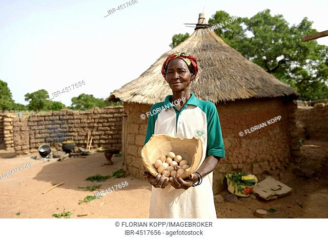 Woman, farmer proudly showing eggs from her chickens, Toeghin village, Oubritenga province, Plateau Central region, Burkina Faso