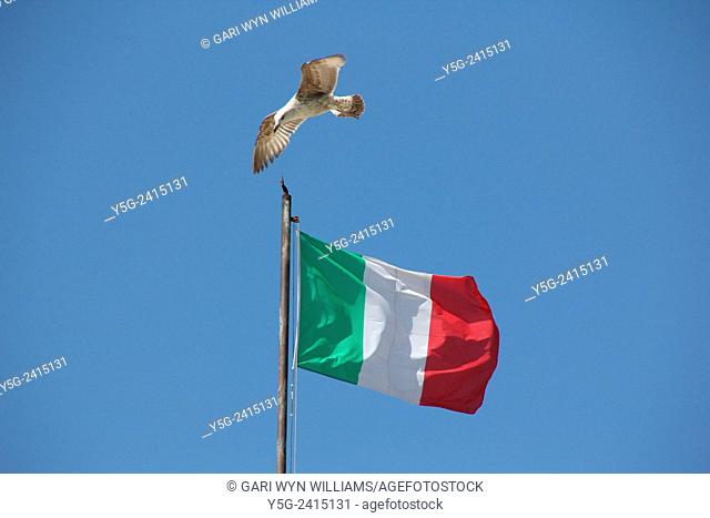 Italian flag flying in wind with seagull in Rome Italy
