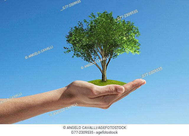 Woman's hand holding a tree