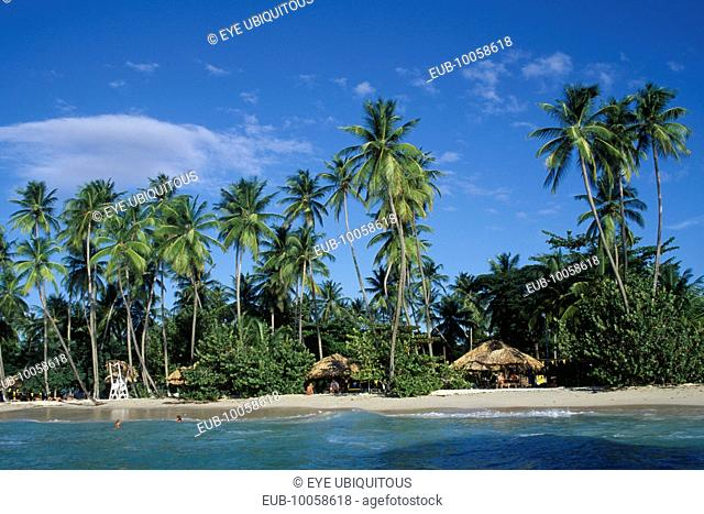 Beach with thatched huts and palm trees overlooking water