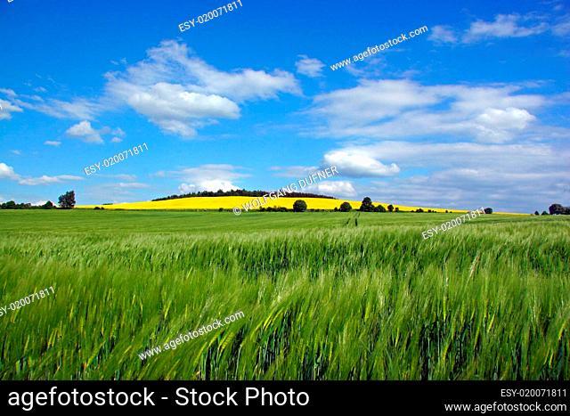 Wind weht durch die Felder