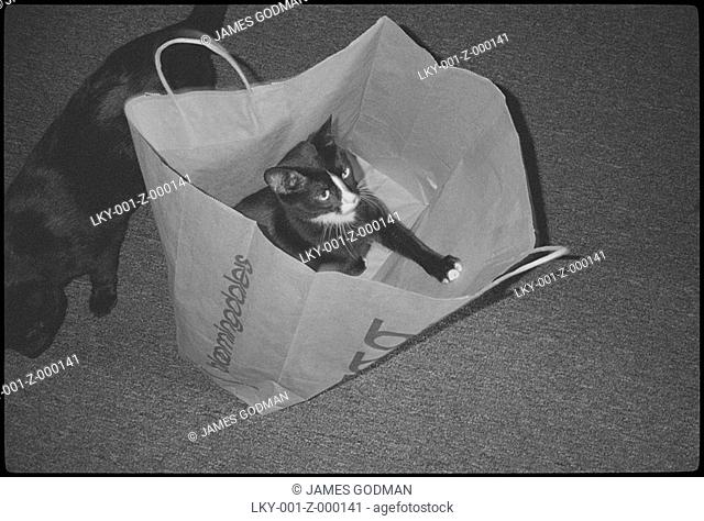 Cat playing in shopping bag