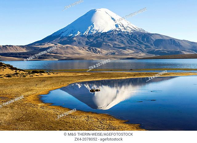 Parinacota volcano reflecting in the Chungara lake, Lauca national park, UNESCO Biosphere Reserve, Arica and Parinacota Region, Chile
