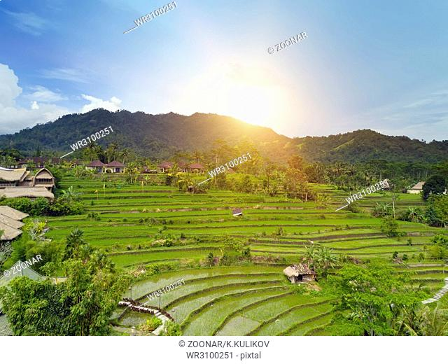 Aerial view from drone on rice terraces. Indonesia. Bali