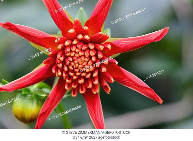 Single Red Star