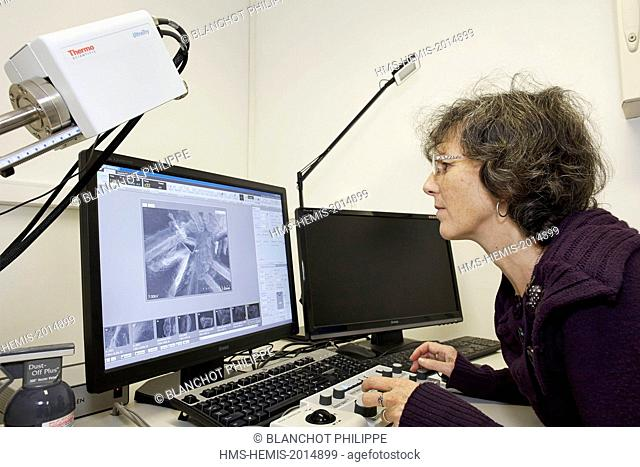 France, Paris, National Museum of Natural History, Christine Rollard, araneologist, taking pictures of arachnids bristles with a Scanning Electron Microscopy...