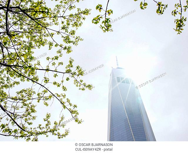 Low angle view of sunlit branches and One World Trade Center, New York, USA