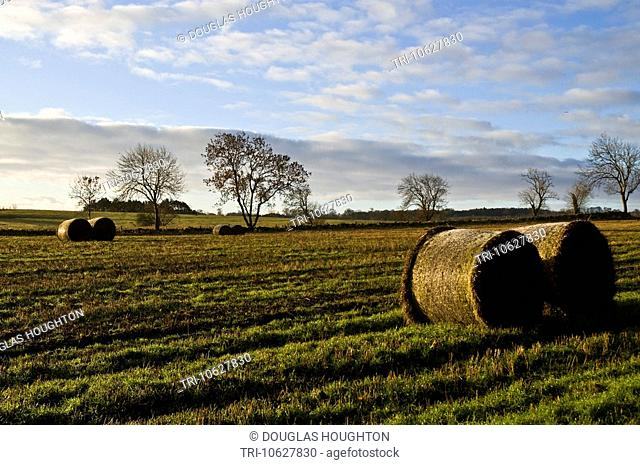 WESTER HALL NORTHUMBRIA Trees silhouette fields winter morning sky straw hay bales