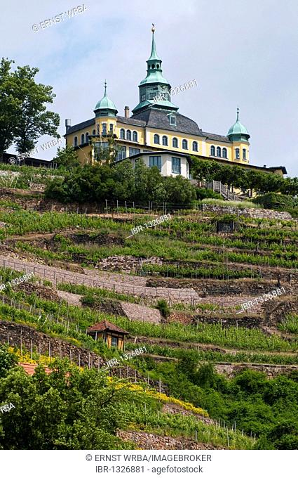 Spitzhaus building above a vineyard, Radebeul near Dresden, Germany, Europe