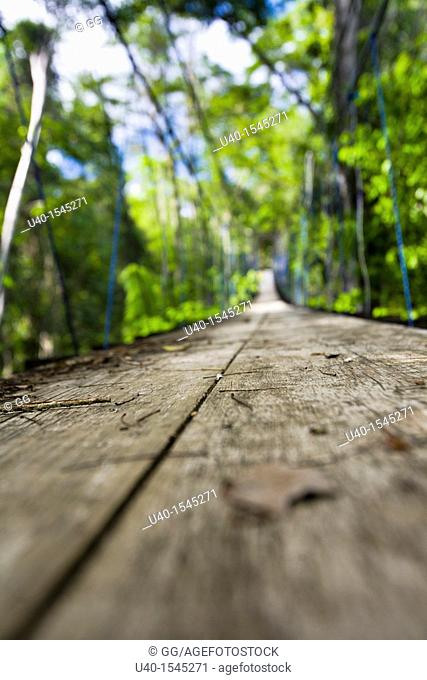 Guatemala, Rio Dulce, wooden suspension path through the jungle