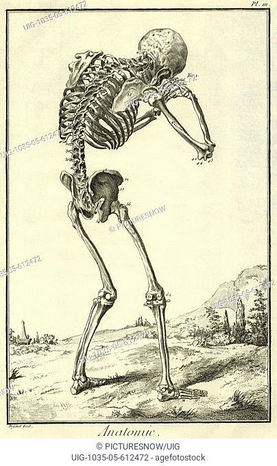 Skeleton Hunched Over