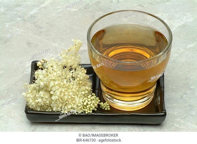 Meadowsweet or Bridewort (Filipendula ulmaria), herbal tea, ingredient in Aspirin