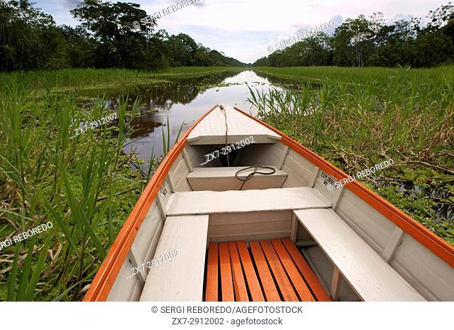 Amazon rainforest: Expedition by boat along the Amazon River near Iquitos, Loreto, Peru. Navigating one of the tributaries of the Amazon to Iquitos about 40...