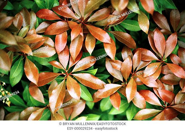 Close-up of leaves on bush