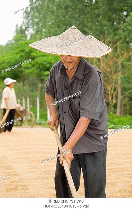 Farmer turning grain in a field, Zhigou, Shandong Province, China
