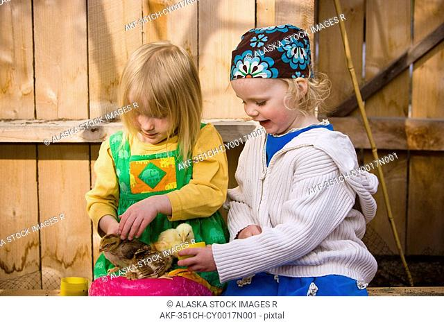 Portrait of two toddler girls playing with the baby chickens, Spring, Anchorage, Southcentral Alaska
