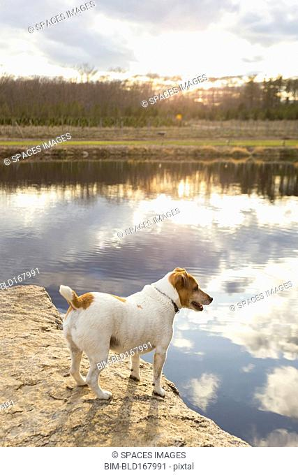 Dog standing over remote lake reflecting cloudy sky