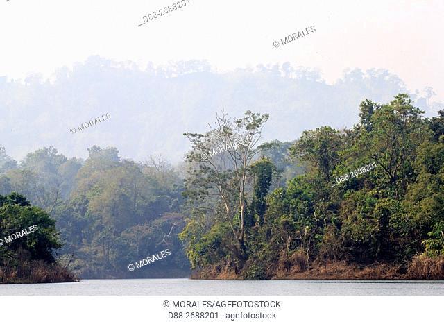 South east Asia, India,Tripura state,Bambur lake,forest along the lake