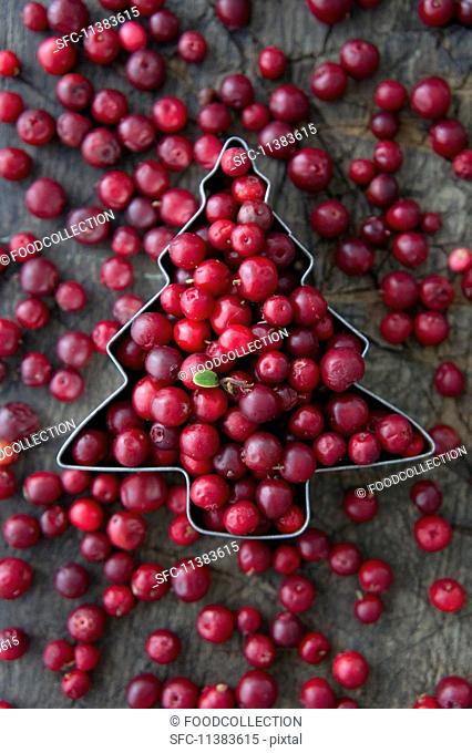 Lingon berries in a Christmas tree cutter